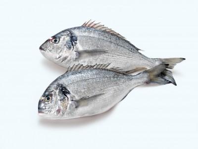Frischer Fisch von Hummer Pedersen